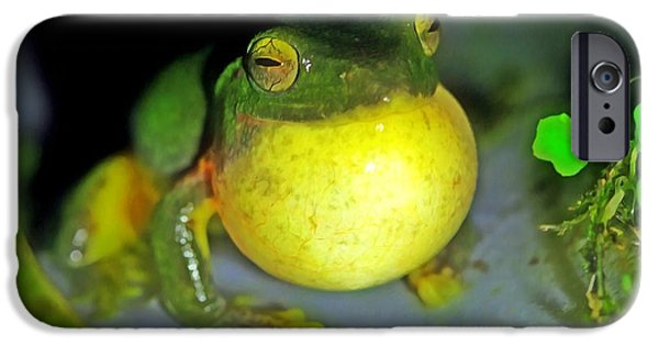 Spring Peepers Paintings iPhone Cases - Green tree frog croaking iPhone Case by Lanjee Chee