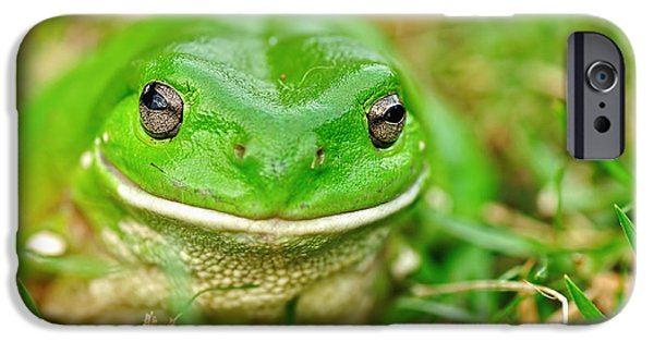 Amphibians Photographs iPhone Cases - Green Tree Frog iPhone Case by Kaye Menner