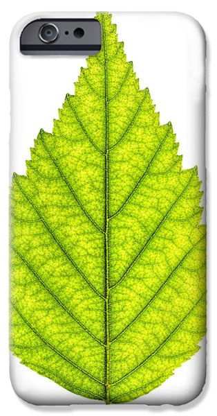 Young iPhone Cases - Green tree leaf iPhone Case by Elena Elisseeva