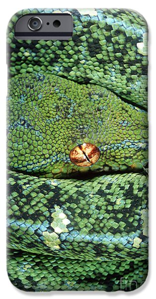 Burmese Python iPhone Cases - Green Tree Python iPhone Case by Gregory G. Dimijian