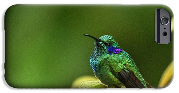 Aviary iPhone Cases - Green Violetear Hummingbird iPhone Case by Heiko Koehrer-Wagner