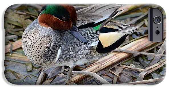 Nature Center Pond iPhone Cases - Green-winged Teal iPhone Case by Debra Martz