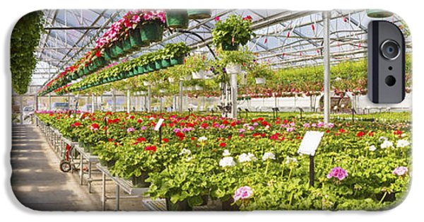 Basket iPhone Cases - Greenhouse Full Of Geraniums Panorama Photograph iPhone Case by Keith Webber Jr