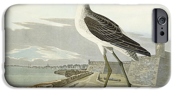 Feather Drawings iPhone Cases - Greenshank iPhone Case by John James Audubon