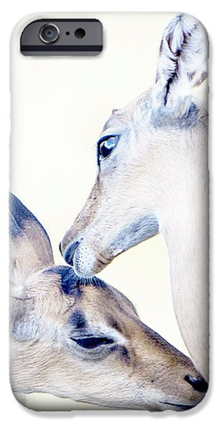 Fauna Pastels iPhone Cases - Greetings II iPhone Case by Daamonturne