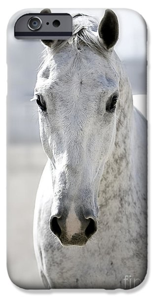 Thoroughbred iPhone Cases - Grey Ghost iPhone Case by Holly Martin