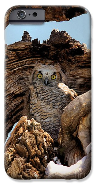 Wild Animals Pyrography iPhone Cases - Grey Horned Owl iPhone Case by Brenda Deem