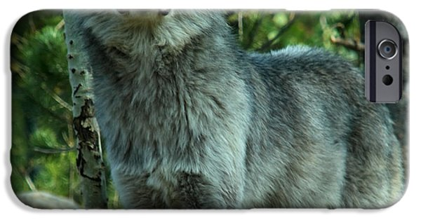 Wolf Photographs iPhone Cases - Grey Wolf  iPhone Case by Aidan Moran