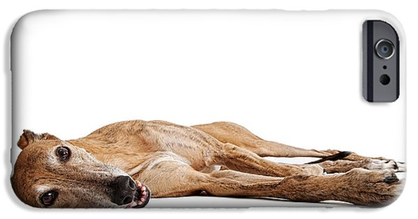 Rescued Greyhound iPhone Cases - Greyhound Dog Laying Down iPhone Case by Susan  Schmitz