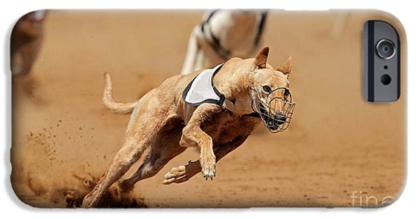 Dogs iPhone Cases - Greyhound races iPhone Case by Marvin Blaine