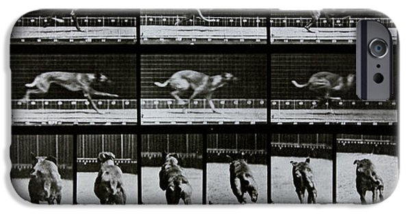 Black Dog iPhone Cases - Greyhound running iPhone Case by Eadweard Muybridge
