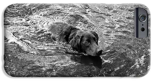 Dog And Tennis Ball iPhone Cases - Head in Water iPhone Case by Agata Wisniowska