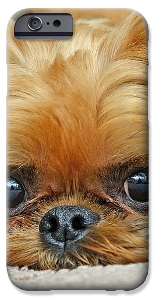 Griff iPhone Case by Lisa  Phillips