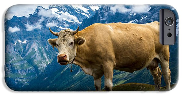 Grindelwald iPhone Cases - Grindelwald Cow - Bernese Alps - Switzerland iPhone Case by Gary Whitton
