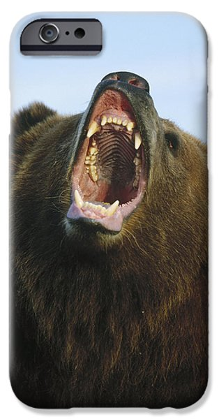 Growling iPhone Cases - Grizzly Bear Close Up Of Growling Face iPhone Case by Konrad Wothe