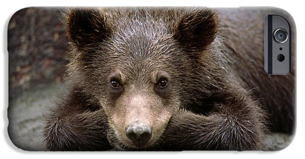 Innocence iPhone Cases - Grizzly Bear Cub Laying On Ground iPhone Case by Doug Lindstrand