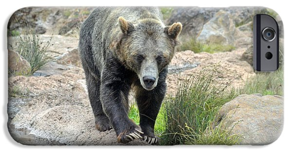 Walking Beat iPhone Cases - Grizzly Bear iPhone Case by Jim Fitzpatrick