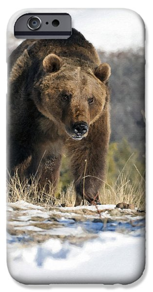 Animals Photographs iPhone Cases - Grizzly Bear - Seeking Hibernation iPhone Case by Wildlife Fine Art