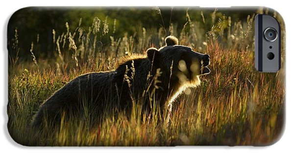 Animals iPhone Cases - Grizzly-Bear-animals-image 8 iPhone Case by Wildlife Fine Art