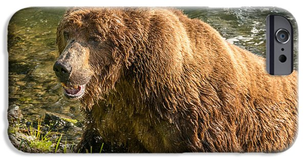 Missing Teeth iPhone Cases - Grizzly on the river bank iPhone Case by Joan Wallner