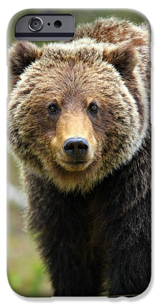 Boston iPhone Cases - Grizzly iPhone Case by Stephen Stookey