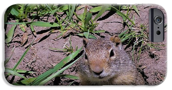 Ground Level iPhone Cases - Ground Squirrel iPhone Case by Dan Sproul
