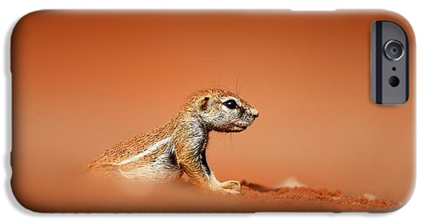 Small iPhone Cases - Ground squirrel on red desert sand iPhone Case by Johan Swanepoel
