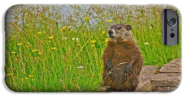 Groundhog Digital Art iPhone Cases - Groundhog at Point Amour in Labrador iPhone Case by Ruth Hager