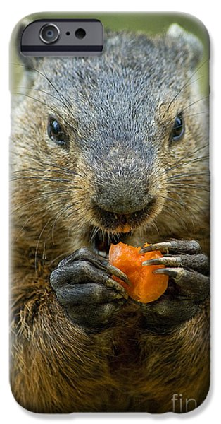 Groundhog iPhone Cases - Groundhogs favorite snack iPhone Case by Paul W Faust -  Impressions of Light