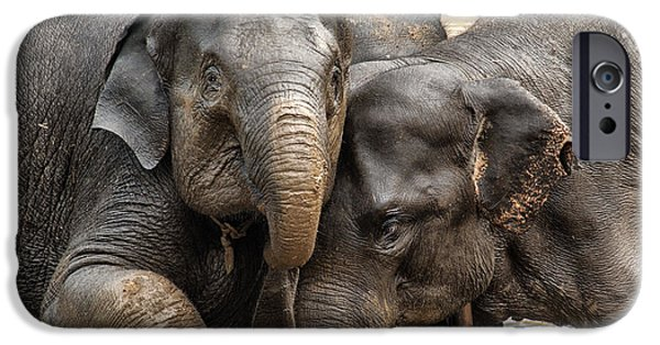 Elephants iPhone Cases - Group Pose iPhone Case by Shauna Milton
