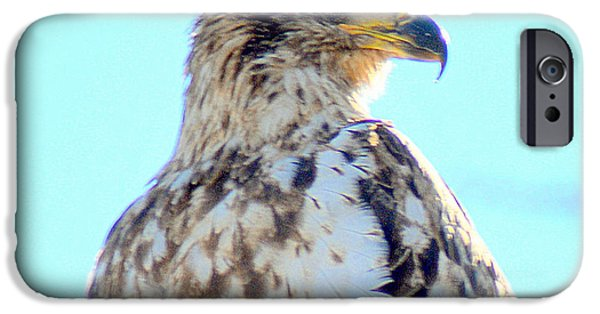 I Am Not iPhone Cases - Growing Up Eagle ll iPhone Case by Rennae Christman