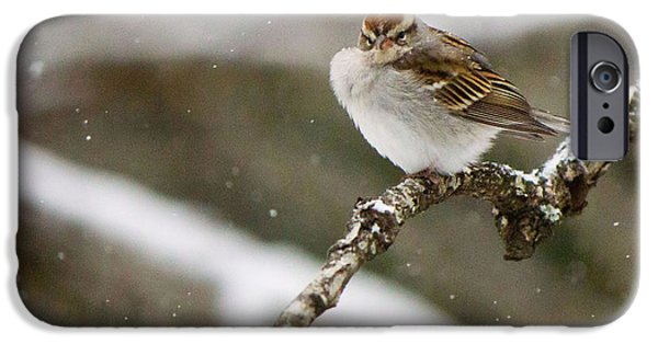 Snowy Day iPhone Cases - Grumpy Bird X1 iPhone Case by Sherry Bowen