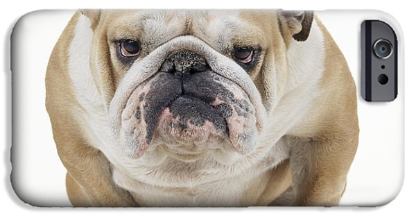 Dog Close-up iPhone Cases - Grumpy Bulldog iPhone Case by John Daniels