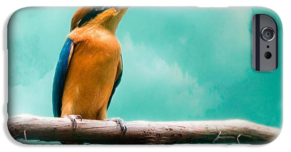Gary Heller iPhone Cases - Guam Kingfisher - Exotic birds iPhone Case by Gary Heller