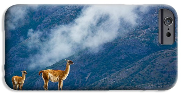 Chile iPhone Cases - Guanaco Mother and Child iPhone Case by Inge Johnsson