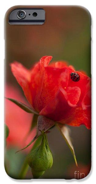 Poetic Photographs iPhone Cases - Guest of the Queen iPhone Case by Mike Reid