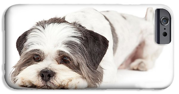 Trick iPhone Cases - Guilty Looking Lhasa Apso Dog Laying iPhone Case by Susan  Schmitz
