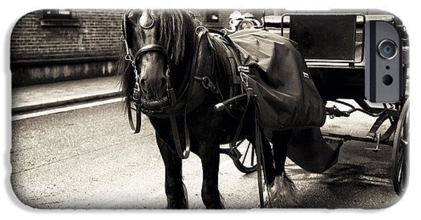 Horse And Buggy iPhone Cases - Guinness Horse iPhone Case by John Rizzuto