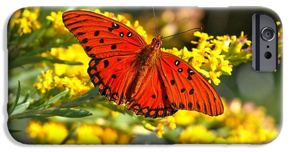 Buterfly iPhone Cases - Gulf Fritillary iPhone Case by Adam Jewell