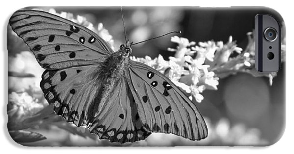 Buterfly iPhone Cases - Gulf Fritillary Black And White iPhone Case by Adam Jewell