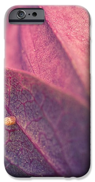 Gulf Fritillary Butterfly Egg iPhone Case by Priya Ghose