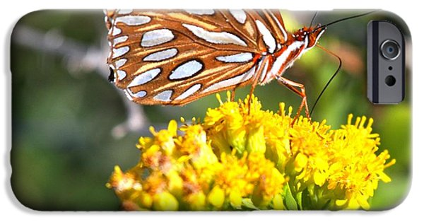 Buterfly iPhone Cases - Gulf Fritillary On A Flower iPhone Case by Adam Jewell
