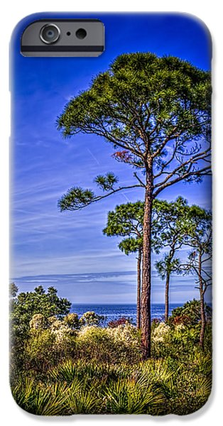 Pines Photographs iPhone Cases - Gulf Pines iPhone Case by Marvin Spates