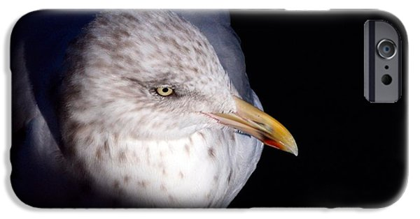 Chatham iPhone Cases - Gull #2 iPhone Case by Stuart Litoff