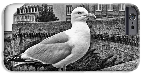 Seagull iPhone Cases - Gull at Saint-Malo iPhone Case by Nikolyn McDonald