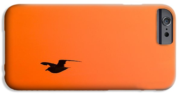 Flying Seagull iPhone Cases - Gull at Sunset iPhone Case by Stuart Litoff