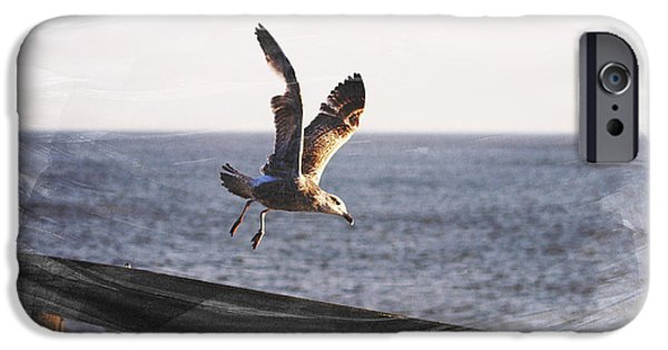 Flying Seagull iPhone Cases - Gull in Flight iPhone Case by Martin Newman