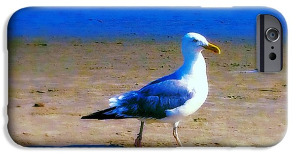 Seagull Pastels iPhone Cases - Gull iPhone Case by Lori Bourgault