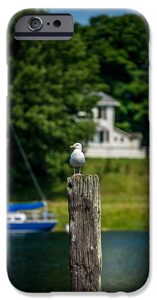 Lakescape iPhone Cases - Gull on Piling iPhone Case by Paul Freidlund