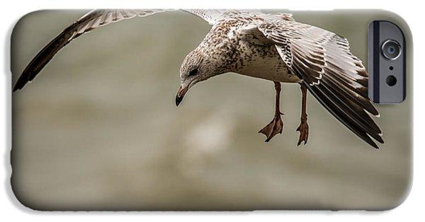 Sea Birds iPhone Cases - Gull iPhone Case by Paul Freidlund